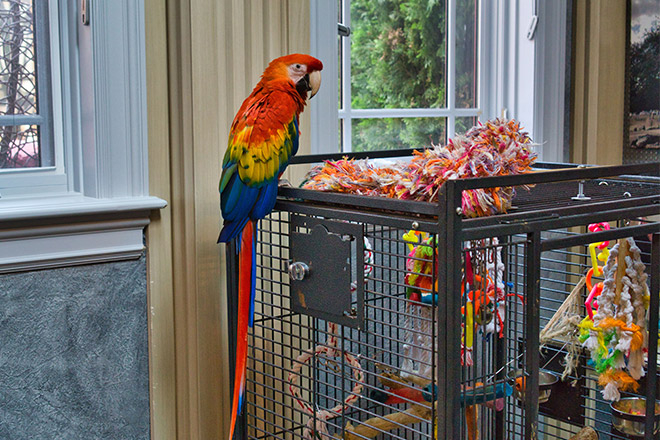 The client's stunning parrot gets to enjoy the fish tank every day