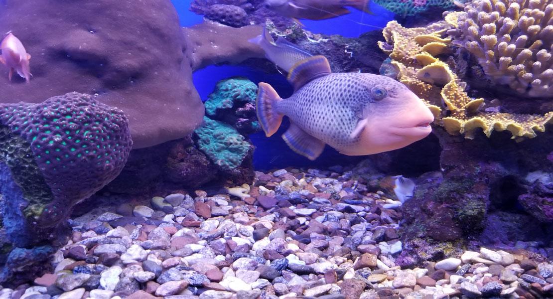 Jenkinson Public Aquarium Displays